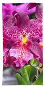 Orchid Aliceara Marfitch Beach Towel