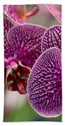 Orchid Ascda Laksi Beach Towel