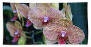 Orchid Beauty Beach Towel