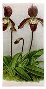 Orchid, C. Oenanthum Superbum, 1891 Beach Towel
