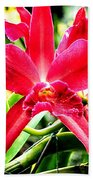 Orchid Cattlianthe Hybrid Beach Towel