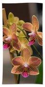 Orchid Chingruey's Goldstaff Beach Towel