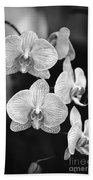 Orchid Cluster Close-up Beach Towel