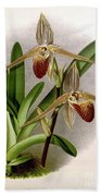 Orchid, Cypripedium Elliottianum, 1891 Beach Towel