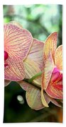 Orchid Delight Beach Towel