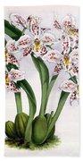 Orchid, O. Alexandrae Plumatum, 1891 Beach Towel