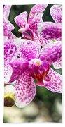 Orchid Phalaenopsis Carnival Bonsall Beach Towel