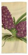 Orchid Saccolabium Ampullaceum  Beach Towel
