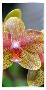 Orchids 35 Beach Towel