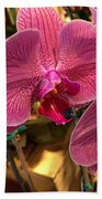 Orchids In Bloom Beach Towel
