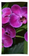 Orchids In Vivid Pink  Beach Towel