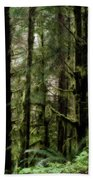 Oregon Old Growth Coastal Forest Beach Towel
