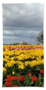 Oregon Tulip Fields 2 Photograph Beach Towel