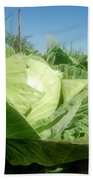 Organic White Cabbage  Beach Towel