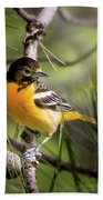 Oriole And Pine Cone Beach Towel