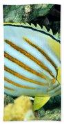 Ornate Butterflyfish Beach Towel