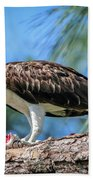 Osprey Breakfast Break Beach Towel