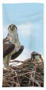 Osprey Family Beach Towel