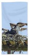 Osprey Family Portrait No. 1 Beach Sheet