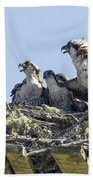 Osprey Family Portrait No. 2 Beach Sheet