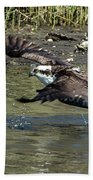 Osprey Fish That Got Away Beach Towel