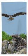 Osprey Flying Over A Bird's Nest Beach Towel