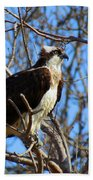 Osprey In Spring Beach Towel