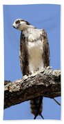 Osprey In The Trees Beach Towel