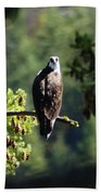 Osprey On Branch Beach Towel