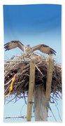 Osprey Beach Sheet