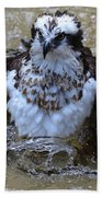 Osprey Splashing In Water Beach Towel
