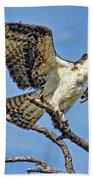 Osprey Wing Stretch Beach Towel