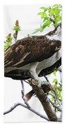 Osprey With Snack Beach Towel