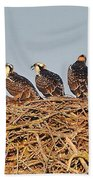 Osprey Young Beach Towel