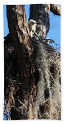 Ospreys In Spanish Moss Nest Beach Towel