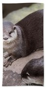 Otters In Arms Beach Towel