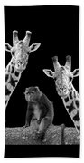 Our Wise Little Friend - Monkey And Giraffes In Black And White Beach Towel
