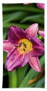 Purple Stella Doro Day Lily Beach Towel