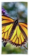 Outstretched Monarch Beach Towel