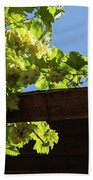Overhead Grape Harvest - Summertime Dreaming Of Fine Wines Beach Towel