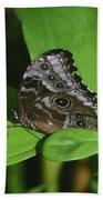 Owl Butterfly With Fantastic Distinctive Eyespots  Beach Sheet