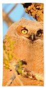 Owlet In A Spring Sunrise Beach Towel