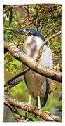 P2024983 Black Crowned Night Heron Beach Towel