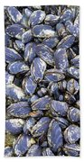 Pacific Blue Mussels Beach Towel