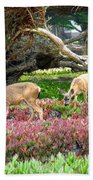 Pacific Grove Deer Feeding Beach Towel