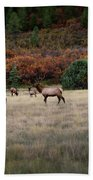 Pagosa Autumn Elk Beach Towel by Jason Coward