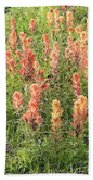 Paintbrush Beauties Beach Towel