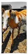 Painted Horse Beach Towel