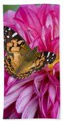 Painted Lady On Dahlia Beach Towel