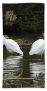 Pair Of Egrets Beach Towel by George Randy Bass